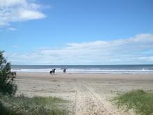 caballos en la playa de la coronilla