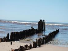 palos clavados en la playa